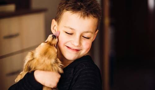 Animais domésticos: qual é o mais aconselhável para o meu filho!