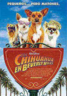 Uma chihuahua de Beverly Hills